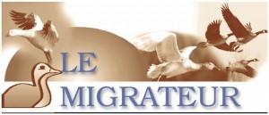 banniere migrateur